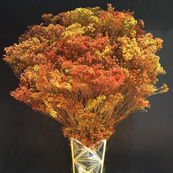 3 loại hoa khô trang trí cho phòng khách sang trọng và nghệ thuật